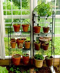 greenhouse3_sm