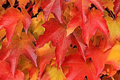 autumn (2)sm